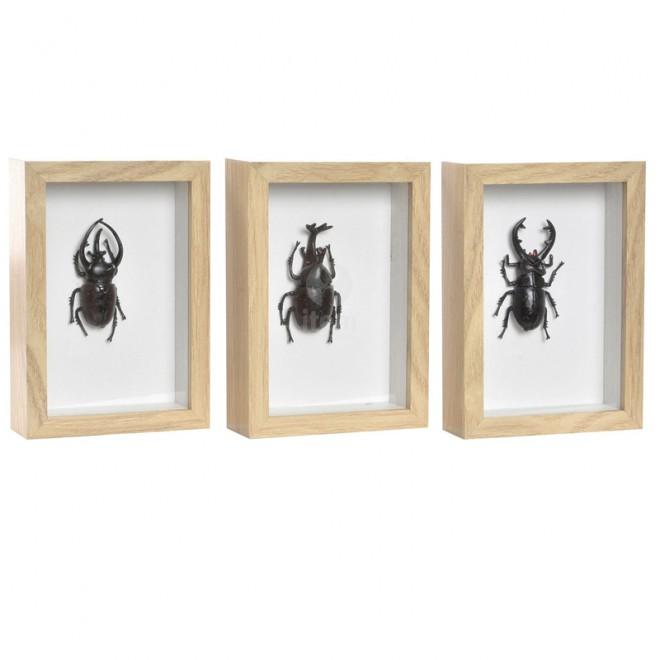Cuadros insectos negros